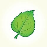 Green leaf isolated vector Royalty Free Stock Photo