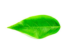 Green leaf isolated Royalty Free Stock Photo