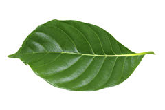Green leaf isolated on white Royalty Free Stock Photography