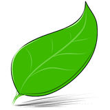 Green leaf isolated on white vector illustration Royalty Free Stock Photo