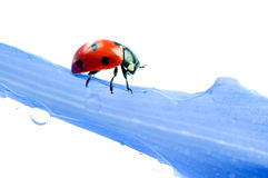Green leaf with ladybug Stock Images