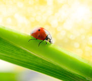 Green leaf with ladybug Stock Image