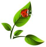 Leaf and Ladybug Stock Photography