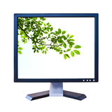 Green leaf in lcd monitor isolated Royalty Free Stock Photo