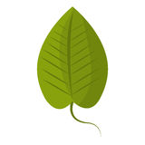 Green leaf or leaves ecology icon design. Stock Photos