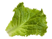 Green leaf of lettuce Stock Photography