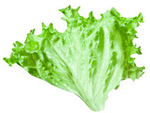 Green leaf lettuce. On a white background. File contains a path to cut Royalty Free Stock Photos