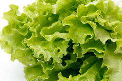 Green leaf lettuce Stock Images