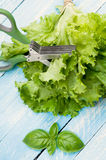 Green leaf of lettuce and basil. Stock Photography