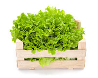 Green leaf lettuce in crate Royalty Free Stock Photography