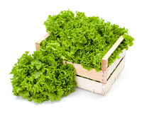 Green leaf lettuce in crate Stock Photos