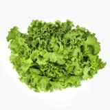 Green Leaf Lettuce Stock Image