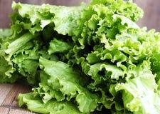 Green leaf lettuce. Macro Stock Photo