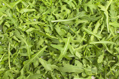 Green leaf lettuce. Texture, background of green leaves lined with rocket salad stock image