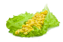 Green leaf lettuce and yellow corn Stock Photos