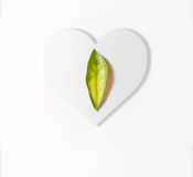 Green leaf lies on a white heart, love concept, March 8, Interna Stock Images