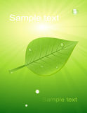 Green leaf with light Stock Image