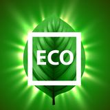 Green leaf with light beams and eco frame. Eco nature background concept. Stock Image