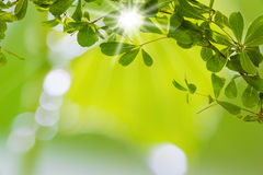 Green leaf with light bokeh and over light the sun Stock Photos