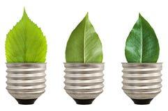 Green leaf light bulb Stock Photo