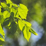 Green leaf with light Royalty Free Stock Images
