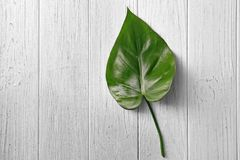 Green leaf on light wooden background. Top view Stock Photos