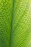 Green leaf line texture background, vertical Stock Images