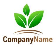 Green leaf logo. Isolated vector green leaves symbol on brown ground double hill with company name lettering on white background. Ideal for corporate logo, icon Royalty Free Stock Image