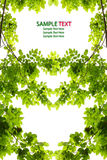 Green leaf love heart frame isolated Stock Photography