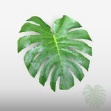 Green leaf low poly-1