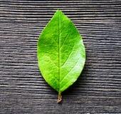 Green leaf lying on wooden board Stock Photo