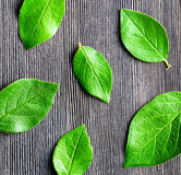 Green leaf lying on wooden board Stock Image
