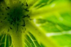 Green leaf macro. Macro view of single green leaf Stock Images