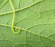 Green leaf macro Stock Photography