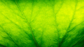 Green leaf macro background
