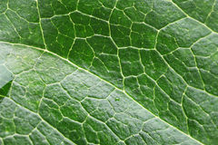 Green Leaf macro. Close-up of a beauty textured green leaf Royalty Free Stock Images
