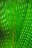 Green leaf macro Stock Image