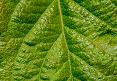 Macro Green Leaf Texture Background stock photos