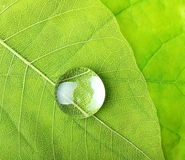 Green leaf macro with drops Royalty Free Stock Photos