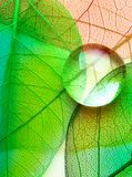 Green leaf macro with drops Stock Images
