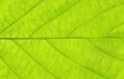 GREEN LEAF MACRO HORIZONTAL Stock Photos