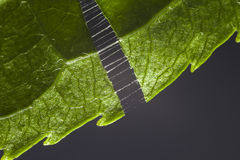 Green leaf macro Stock Image