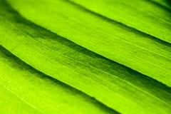 Green leaf macro shot. Macro shot of the green leaf stock photos