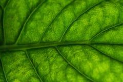 Green leaf macro. Green leaf super macro vibrant colors Stock Images