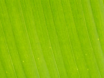 Green leaf macro. Texture background stock image