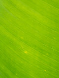 Green leaf macro Stock Images