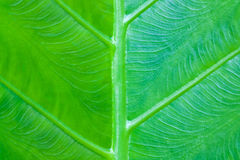 Green leaf for made background Royalty Free Stock Photo