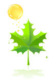 Green leaf of a maple Royalty Free Stock Image