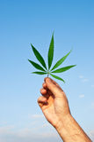 Green leaf of marijuana in a hand Stock Photography