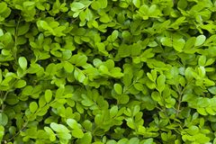Green leaf material, texture ,background stock photo